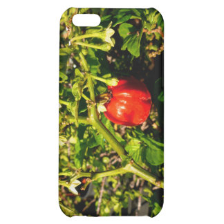 single habanero red pepper in plant iPhone 5C covers