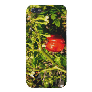 single habanero red pepper in plant iPhone 5 cases