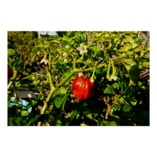 single habanero red pepper in plant print