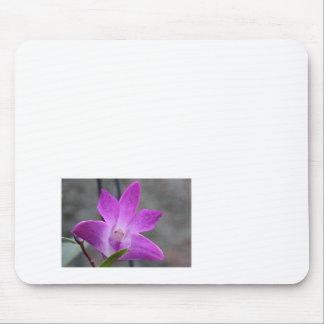 Single Himalayan flower Mouse Pad