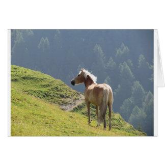 Single horse in an alpine pasture . Sesto Dolomite Card
