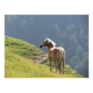 Single horse in an alpine pasture . Sesto Dolomite Postcard