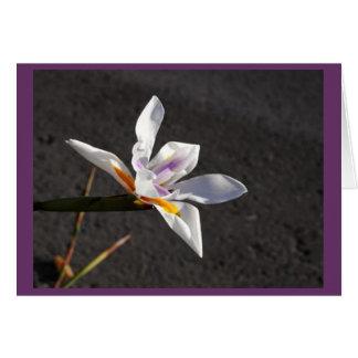 Single Iris Stationery Note Card