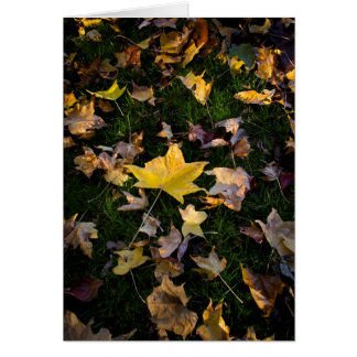 Single Large Autumn Leaf Amongst Smaller Leaves Card