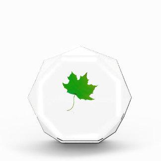 single maple green leaf plant image.png award