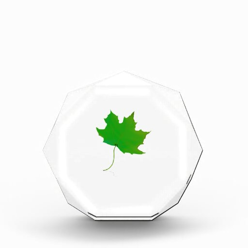 single maple green leaf plant image.png awards