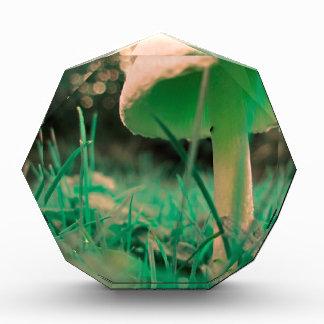 Single Mushroom Acrylic Award