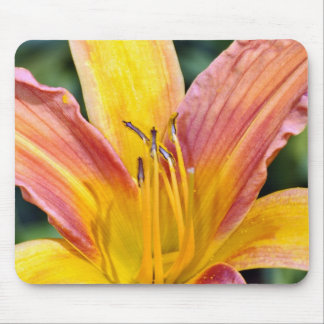 Single orange and yellow lily flower mouse pad