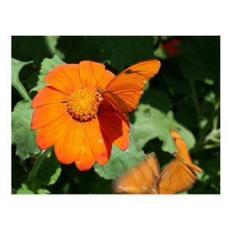 Single orange butterfly on a single orange flower postcard
