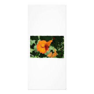 Single orange butterfly on a single orange flower full color rack card