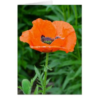 Single orange poppy flower card