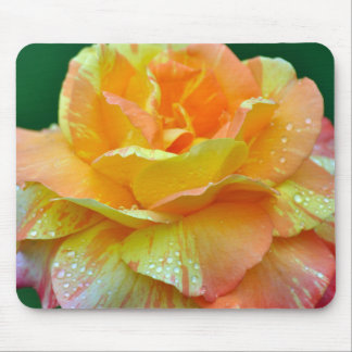Single orange tea rose mouse pad