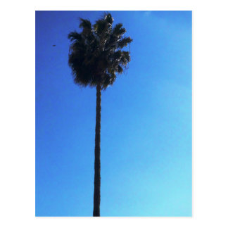 Single Palm Postcard