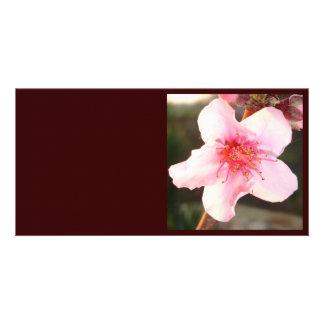 Single Peach Tree Blossom Card