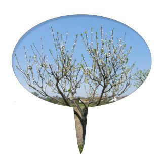 Single pear tree in blossom in Tuscany, Italy Cake Topper