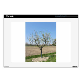 """Single pear tree in blossom in Tuscany, Italy Decal For 15"""" Laptop"""