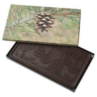 Single Pine Cone Box of Chocolates