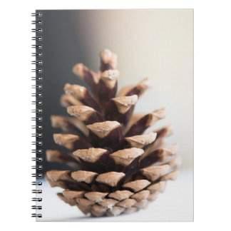 Single pinecone notebook