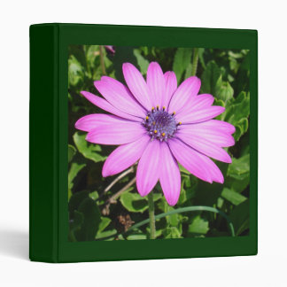 Single Pink African Daisy Against Green Foliage 3 Ring Binder