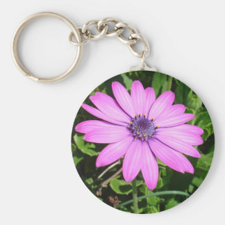 Single Pink African Daisy Against Green Foliage Basic Round Button Keychain