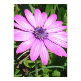 Single Pink African Daisy Against Green Foliage 5.5x7.5 Paper Invitation Card