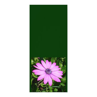 Single Pink African Daisy Against Green Foliage 4x9.25 Paper Invitation Card
