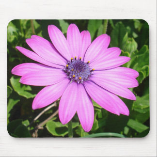 Single Pink African Daisy Against Green Foliage Mouse Pad