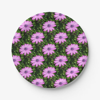 Single Pink African Daisy Against Green Foliage Paper Plate