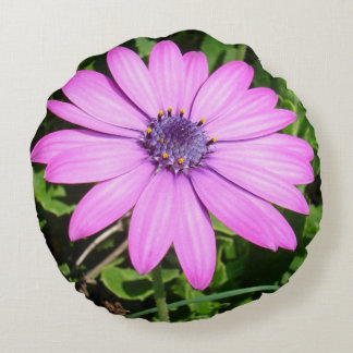 Single Pink African Daisy Against Green Foliage Round Pillow