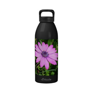 Single Pink African Daisy Against Green Foliage Drinking Bottle