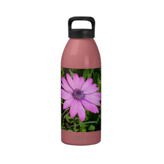 Single Pink African Daisy Against Green Foliage Drinking Bottles