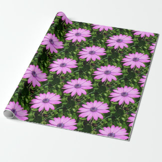 Single Pink African Daisy Against Green Foliage Wrapping Paper