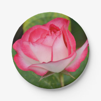 Single pink and white rose paper plate