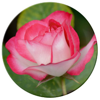 Single pink and white rose plate