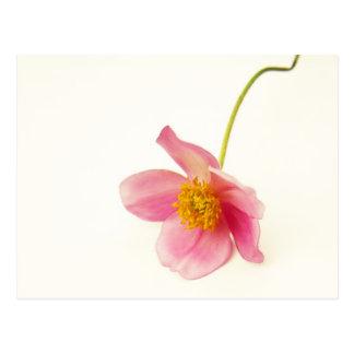 Single Pink Blossom Postcard