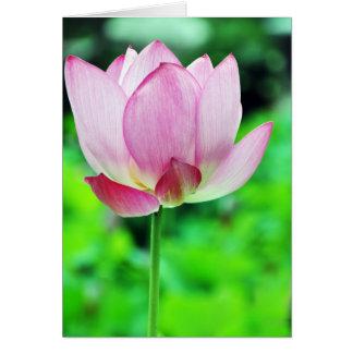 Single Pink Lotus Blossom Card