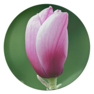Single pink magnolia flower dinner plate