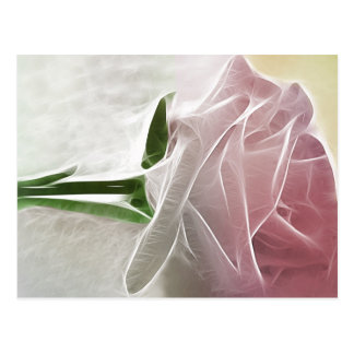 Single Pink Rose Basics Postcard