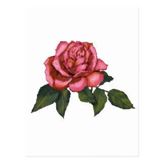 Single Pink Rose: Color Pencil Drawing: Art Postcard