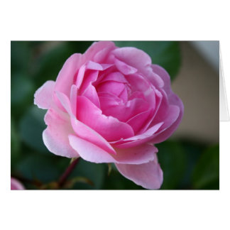 Single Pink Rose Notecard Stationery Note Card