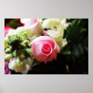 single pink rose photography print