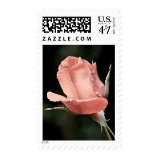 Single Pink Rose Postage