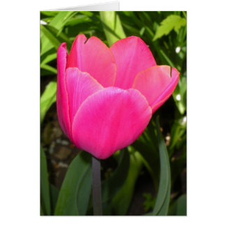 Single Pink Tulip Stationery Note Card