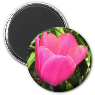 Single Pink Tulip Magnets