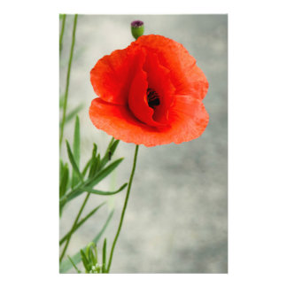 Single poppy flower photo flyer