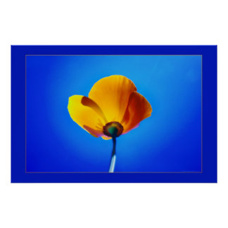 single poppy in yellow and blue poster FROM 8.99