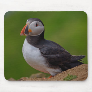 Single Puffin Mouse Pad
