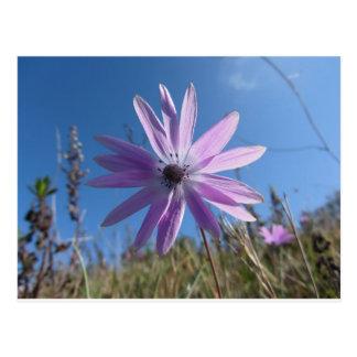 Single purple daisy flower against the blue sky postcard