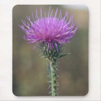 Single Purple flower on a Thorn Mouse Pad