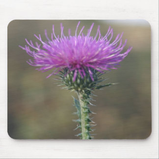 Single Purple flower on a Thorn Mouse Pads